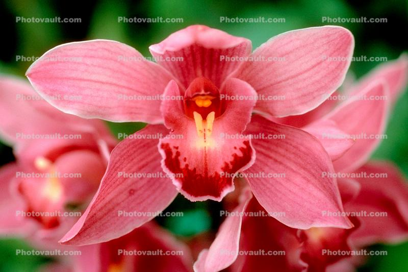 Erotic Flower, Sensuous, Sensual