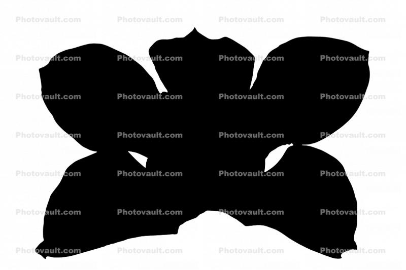 Orchid silhouette, logo, shape