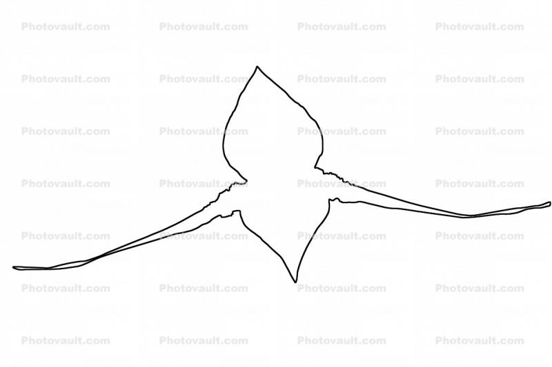 outline, Orchid line drawing, shape