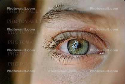Eyeball, Iris, Lens, Pupil, Eyelash, Cornea, Sclera, skin, Female, Woman