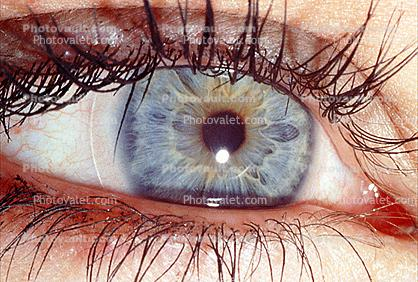 Eyeball, Iris, Lens, Pupil, Cornea, Sclera, Eyelash, aqueous humor, Woman, Female