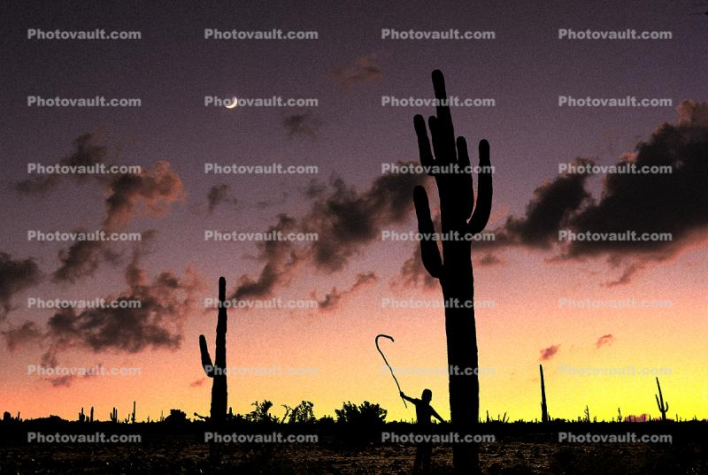 Sunset and a Being amongst the Moon and a Saguaro Cactus Forest