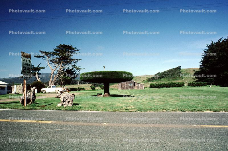 Manicured Bushes, Trees, Tomales, Marin County, California