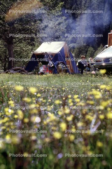 Tent, Flowers, Meadow