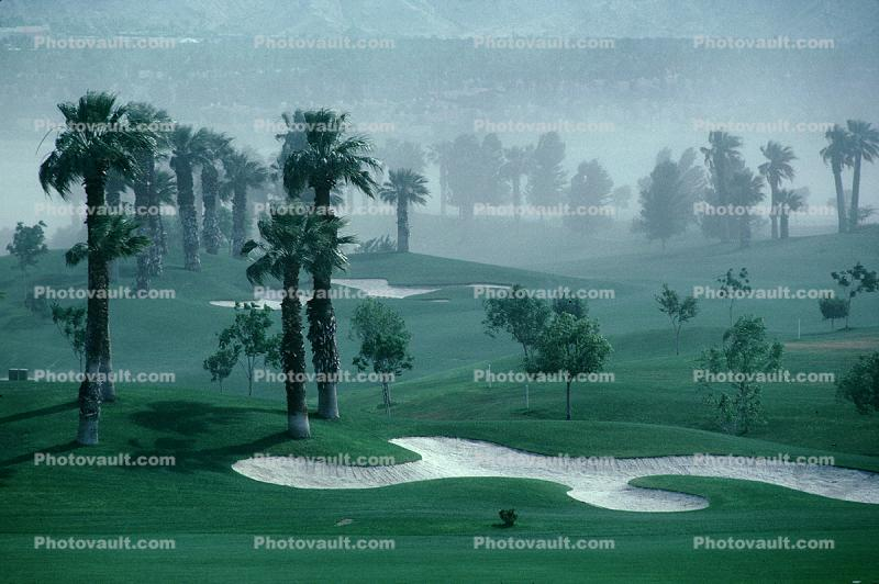 Sand Trap, dust storm, palm trees