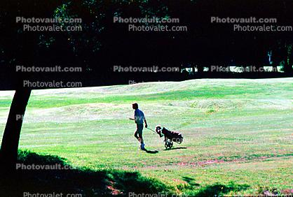 Golfer, male, man, men, boy, Guy, Masculine, Adult, Person, People, Sonoma County, California