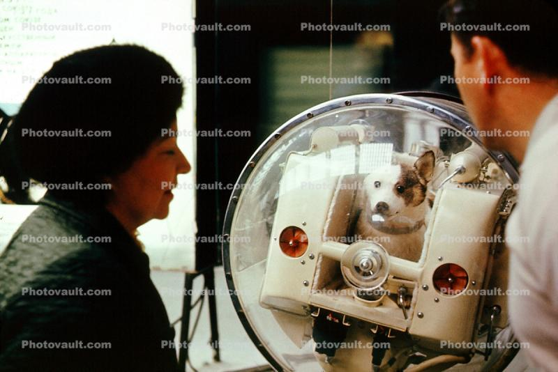 Laika, first dog in space, Memorial Museum of Cosmonautics, Moscow Space Museum, Russian spacecraft