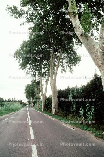 Tree Lined Road, Street, Highway, Valmy, Roadway, Road