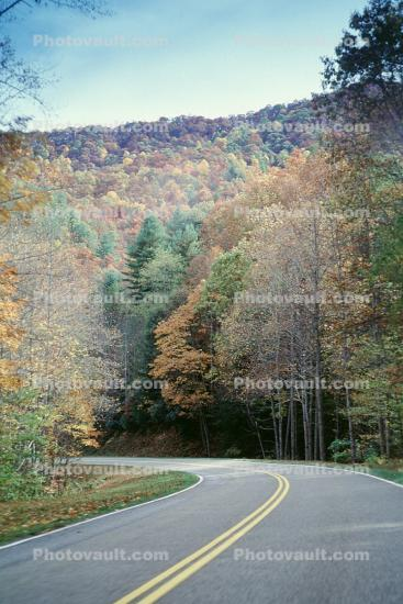 Trees, forest, woodland, Road, Roadway, Highway-28, North Carolina