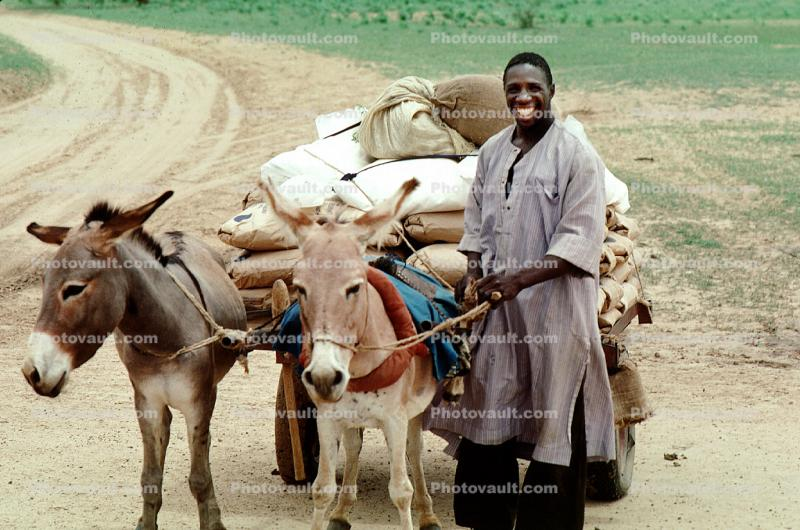 Smiling Man, Donkey, Cart, Desert, Person
