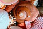 Shell, Snail, sea shell, spiral, seashell, Sea, Marine, AALV01P02_16.4096
