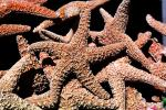 starfish textures, backgrounds, AAOV01P03_10