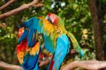 Parrot, Macaw