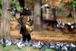 Pigeons, Central Park, Manhattan, autumn, ABDV01P02_19