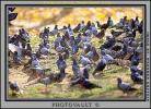Pigeons, Central Park, Manhattan, autumn, ABDV01P03_08
