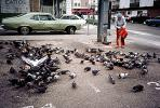 Pigeons, New York City, ABDV01P03_10