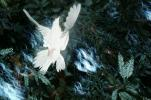 White Dove of Peace, evergreen tree, Equanimity, ABDV01P05_12