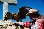 Eagle, Colca Canyon, Arequipa