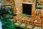 Bird Cages, imprisonment, ABPV01P01_01.3343