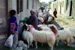 Sheep, Cairo, ACFV03P11_06