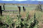 Fence, field, Klamath, Oregon