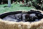 Labrador Retriever in a bath