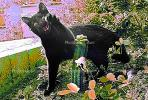 cat emulates a cactus, AFCPCD0653_044C