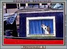 Cat in a Window on a Canal Boat, Amsterdam, Holland