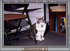 My Cat, Mortimer, AFCV01P07_07