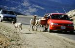 Mountain Goats, Cars, vehicles, automobiles