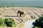 African Elephant, River, Water, South Africa, AMEV01P04_07