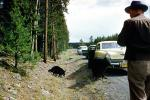 Bear, Forest Ranger, Studebaker Commander, Sedan, Cars, automobile, vehicles, 1956, 1950s