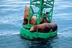 Seals basking on a Navigation Buoy, AOSV01P06_01.4101