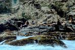 Harbor Seal Colony, cliffs, shore, shoreline, Farallon Islands, Claifornia
