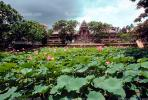 Pond, Lily pads, lotus flowers, building, Toadstools, broad leaved plant