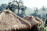 grass thatched huts, homes, houses, roofs, building, Sod, CADV01P12_11