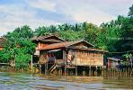 River Market, building, jungle