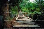 Stairs, Steps, woodland, forest, Nikko