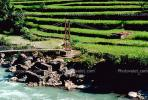 Footbridge, river, suspension bridge, stepped terrace, Rice
