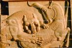 bar-Relief, Lion tearing into an animal, eating, predation, Persepolis, 1950s, CARV01P03_15.0631