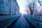 Boardwalk, Bare Trees, Fence, Wall, CCQV01P07_19.0640