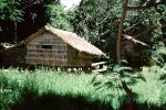 Home, Grass House, Jungle, rain forest, building, Guadalcanal, CDMV01P03_11