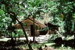 Home, Grass House, Jungle, rain forest, building, Guadalcanal, CDMV01P03_12