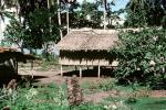 Home, Grass House, building, Guadalcanal, CDMV01P03_17