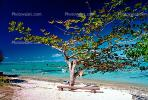Beach, Sand, Bench, Tree, Ocean, Moorea, CDPV01P06_01.1515