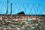 the Wall, Berlin, barbed wire, brick, shoe, boot