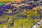 Hay Stacks, homes, houses, hill, hillside, CGGPCD2930_036B
