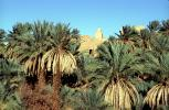 Village, Palm Trees, Saharah Desert