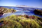 Rocks, Ocean, Shoreline, Seaweed, Mountains, Table Mountain National Park, Cape Town