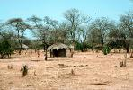 Acacia Tree, house, hut, desert, dry, Thatched Roof House, Home, Grass Roofs, roundhouse, building, Dirt, soil, Sod, CKMV01P02_05.1725